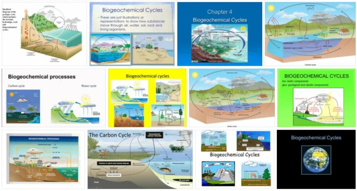 Biogeochemical